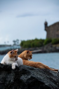 wpid-Puerto-Rico-Day-1-14.jpg
