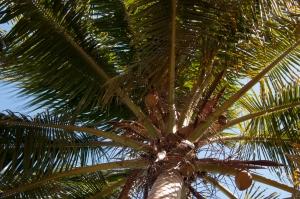 wpid-puerto-rico-indio-62.jpg